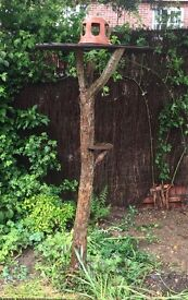 Live tree bird feeder