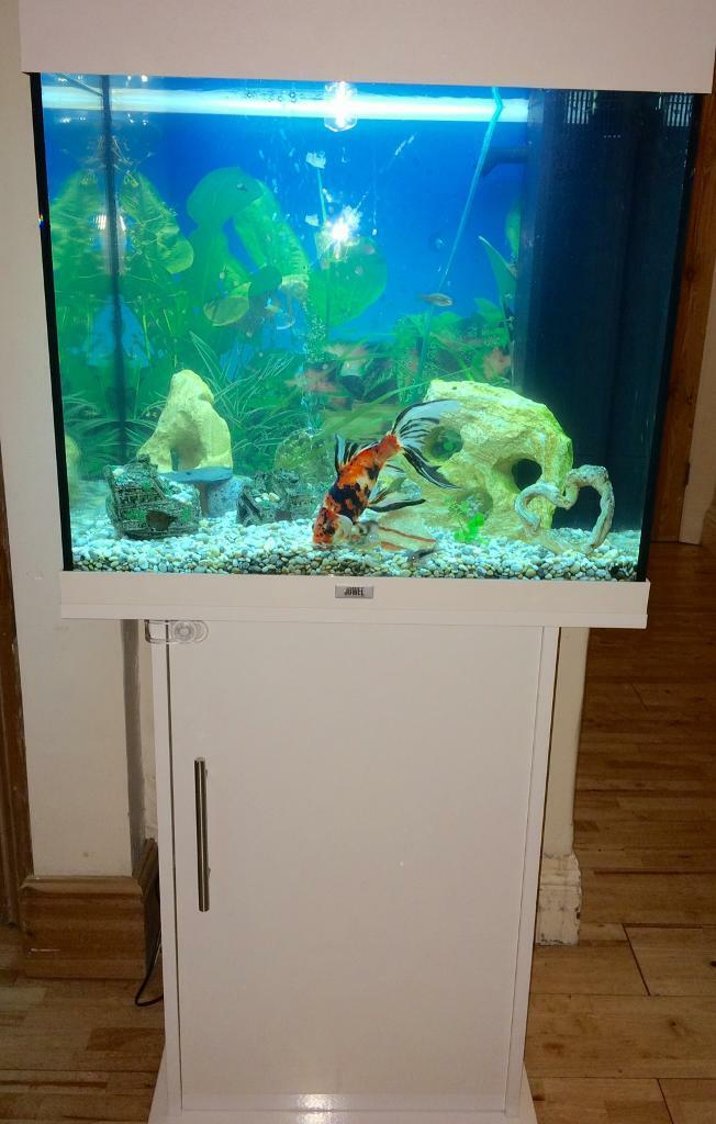 juwel lido 120 aquarium with cabinet in torpoint cornwall gumtree. Black Bedroom Furniture Sets. Home Design Ideas