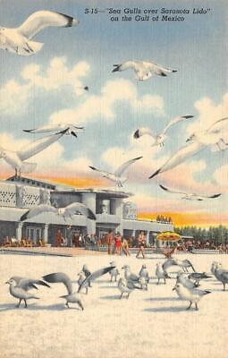 SARASOTA, FL Florida  SEA GULLS Over LIDO KEY  Casino & Beach  c1940's Postcard