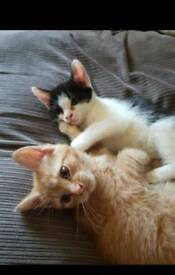 Lovely Kittens looking for a home.