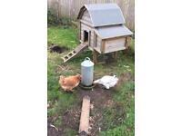 Chicken house feeder and water holder