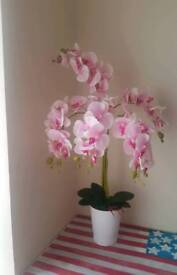 Artificial poted orchids