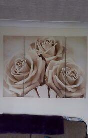 cream rose canvas