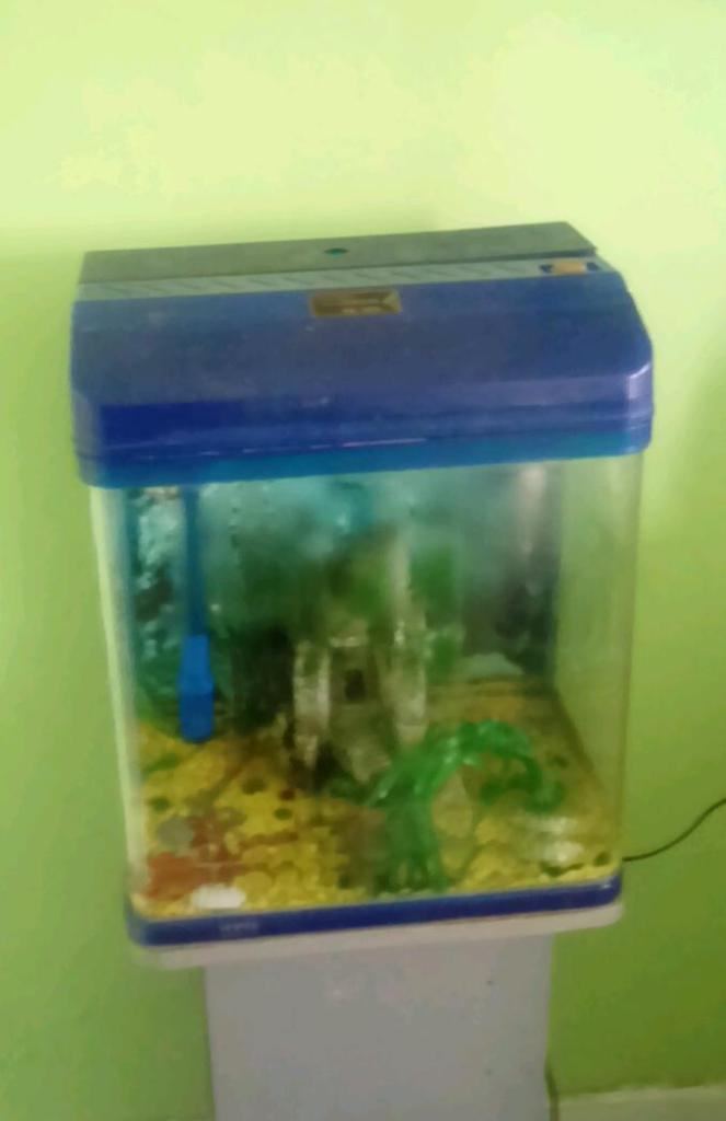 Fish tank for sale 40 litre vgood condition pump heater for Fish tank filter not working