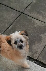 *pending viewing* 7 month pomapoo