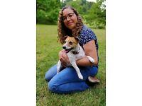 Friendly, Affordable Dog Walking in Greenwich & North Greenwich