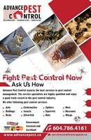 Pest Control Services,lower Mainland