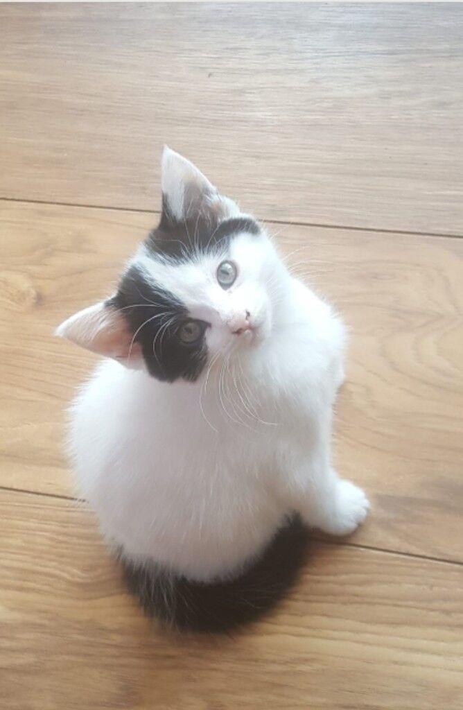 2stunning kittens for sale both female