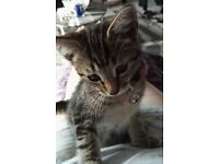 3, Kittens for sale, Bengal cross, 2 girls and a boy, 14 weeks old, £40 each.