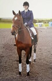 15h 2, Throughbred Mare for Loan