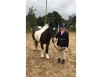 13.2hh pony for part loan/share