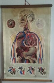 Antique St Johns Ambulance medical chart teaching aid, signed 'J Teck'