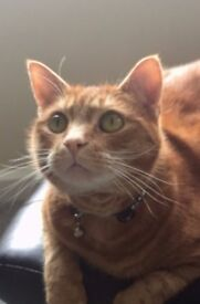 Home for Ralph! I'm a 4 year old Ginger male Cat (neutered) and need a new home.