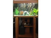 Juwel RIO 125 fish tank +accessories