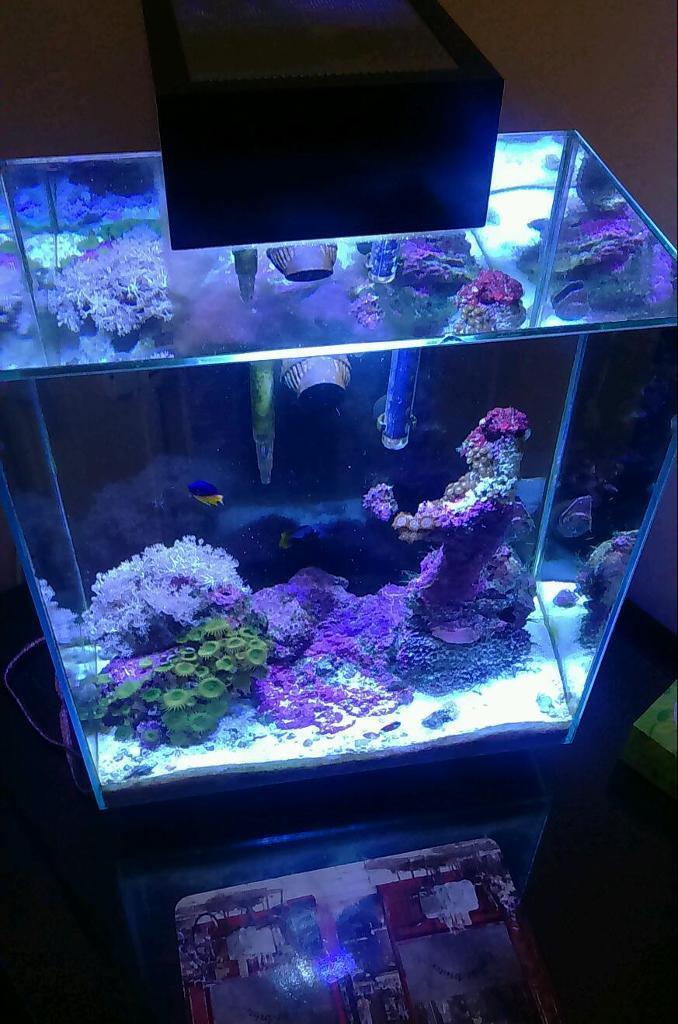 Marine aquarium fish tank fluval edge 46 litre in fair for Fluval edge fish tank