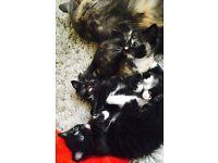 3 beautiful little kittens needing forever homes