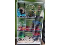 Large Cage and high quality chinchilla Bathing Dust