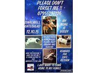 dog missing possibly stolen