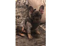 Puppy / Dog Louis Vuitton inspired reflective size small jacket / coat / rain mac