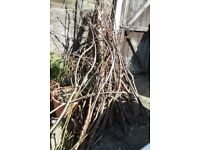 """fire wood, tree branches approx 6' long and up to 4"""" diameter."""
