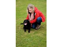 Fur and Whiskers Professional Enthusiastic dog walking/cat/pet sitting service
