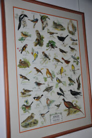 framed bird chart, 'Field And Garden Song Birds', bird names in 4 languages, vintage-style