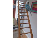 LADDER FOR A PARROT OR A BUDGIE