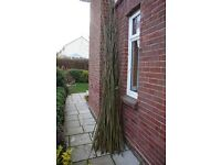Free Willow cuttings-Build a Den or a Fence. Instructions included. 50+ cuttings up to 12 ft long.