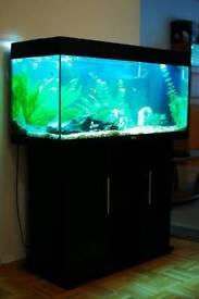 Juwel Fish Tank and Setup