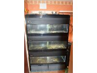 4 Foot Fish Tank Rack with 3 x 4 Foot Tanks