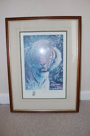 TIGER PICTURE - PORTRAIT OF A KING - LIMITED EDITION No. 82/500 BY D.A. SCOTT