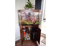 fish tank corner 200 litres