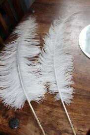12 feathers for wedding decoration