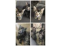 Kittens for sale !!!!