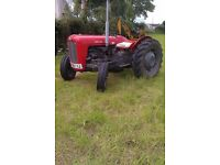 Massey Ferguson 35 Tractor (3 Cylinder). 1960 (Approx). Engine and Clutch Reconditioned.