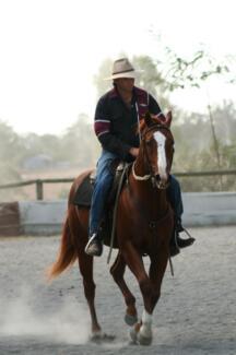 MJM Horsemanship.  General exercising,training & breaking Purga Ipswich City Preview