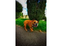 Dog walking - Dagenham, Barking & surrounding areas