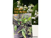 Plants, Lily of the Valley, Japanese Anemone, Verbena