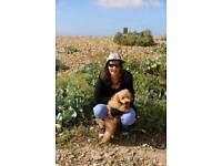 Dog Walker & Pet Feeder - Shepperton, Ashford, Sunbury area