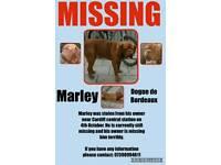 Marley has been stolen