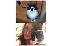 2 lost cats. Port tennant Swansea. Both black & white. 1 fluffy Hannah, 1 short hair jez