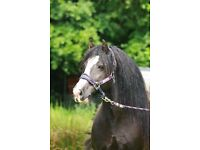 GRAZING LAND/STABLES/BARN *wanted*