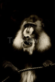 Unique wall art titled .................... Baboon