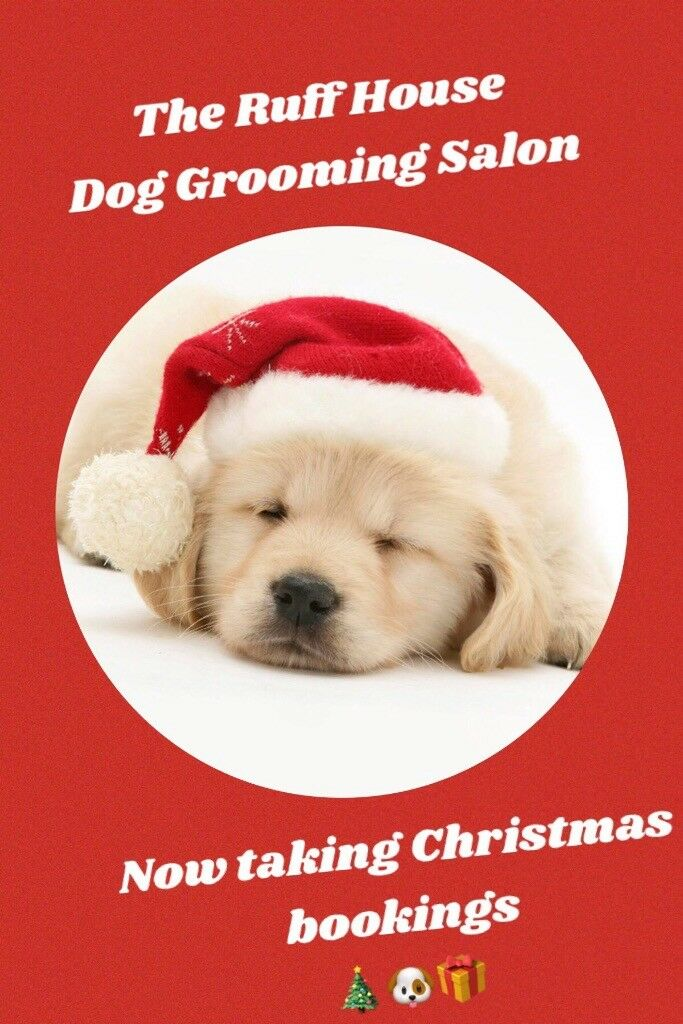 The Ruff House Dog Grooming Salon Dog Groomer In Comber County