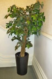 Artificial Jonathan Tree with pot. 165cm high by 90cm wide.