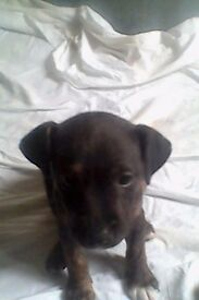 two 10 month old puppys need rehoming