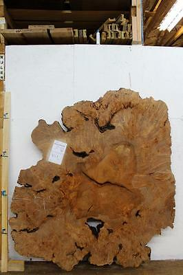 Big Leaf Maple Burl Wall Art Live Edge Natural Wood Slab DIY Raw Figured 4117x1](Diy Wood Wall Art)