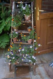 Two vintage rustic ladders for sale