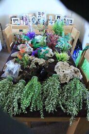 aquarium plants and coral for sale