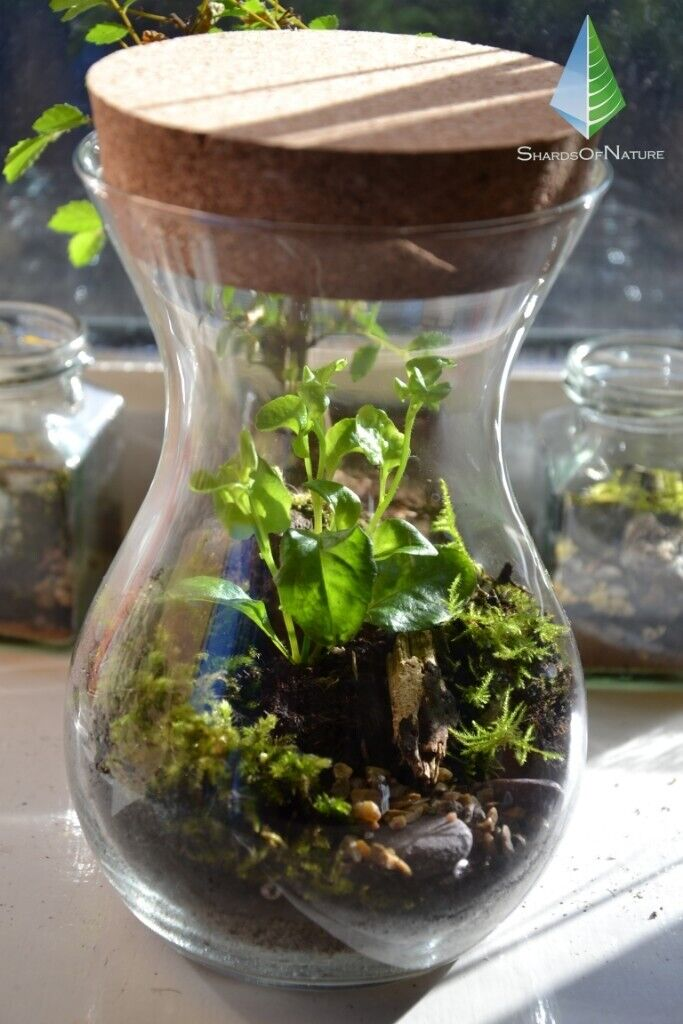 Terrarium Miniature Garden Plant Decor Green Decor Plant